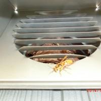 換気口にキイロスズメバチの巣
