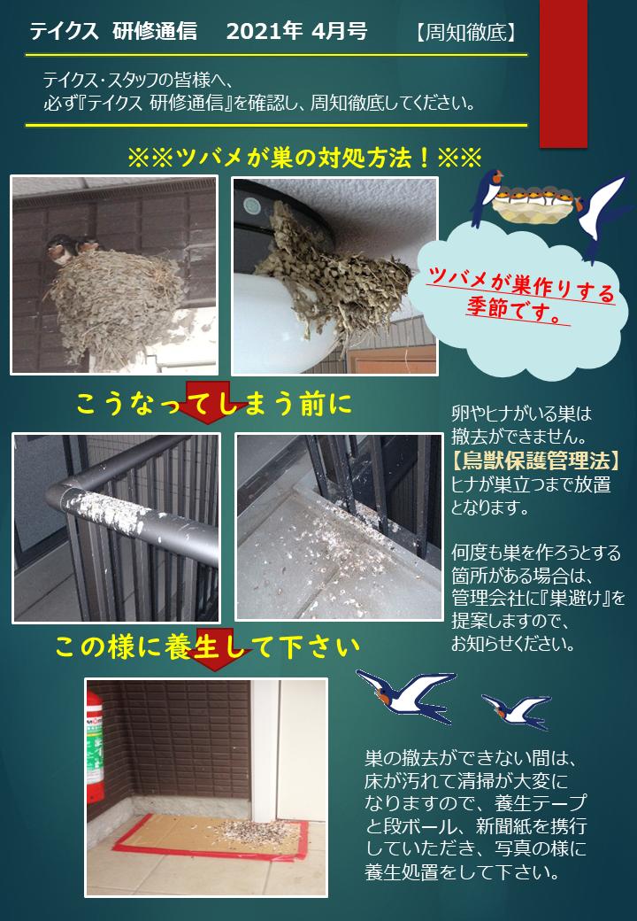 テイクス通信4月号ツバメの巣の対策