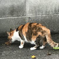 外の猫の写真